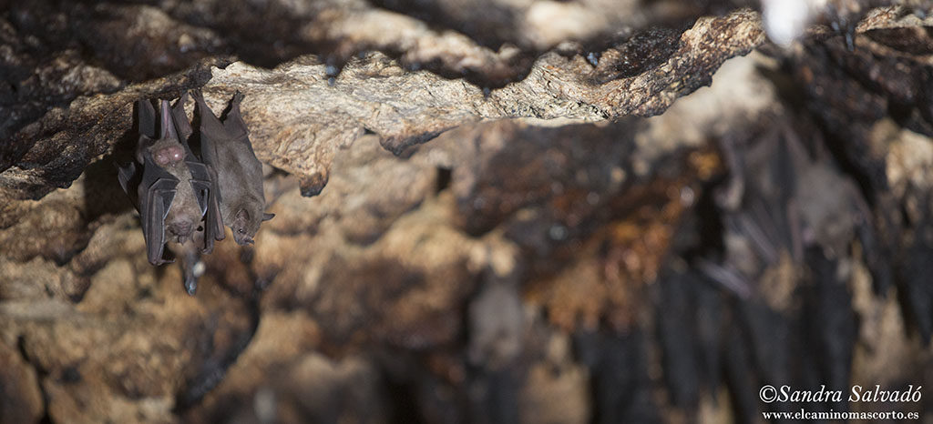 Murciélagos en el cenote Holbox