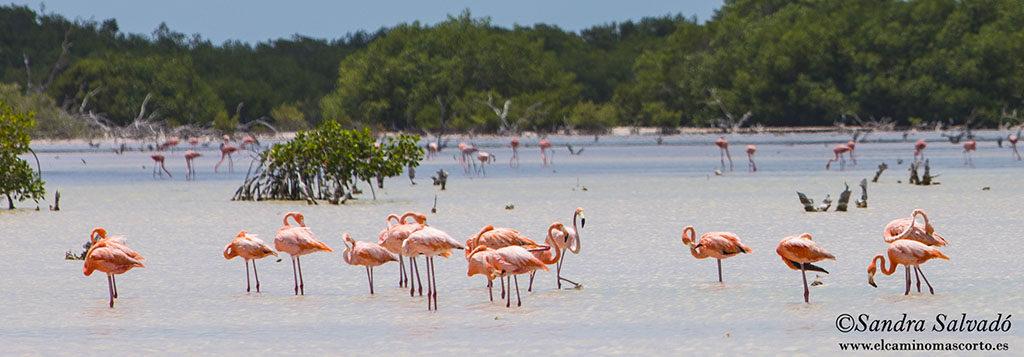 Costa Esmeralda, Yucatan