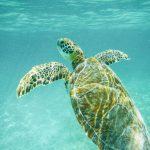 Nadar con tortugas en bahía Akumal