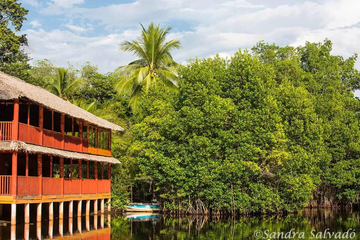 El Castaño, Reserva Biosfera La Encrujicada, Chiapas