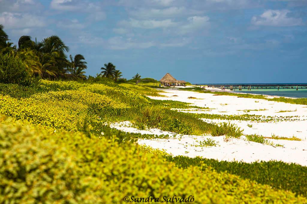 El Cuyo, Reserva Biosfera Ría Lagartos, Yucatán