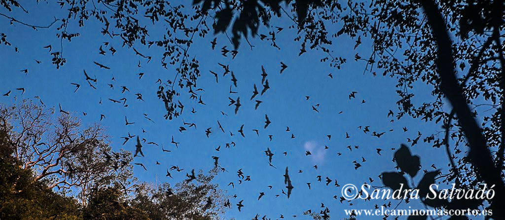 Volcán de los murciélagos de Calakmul