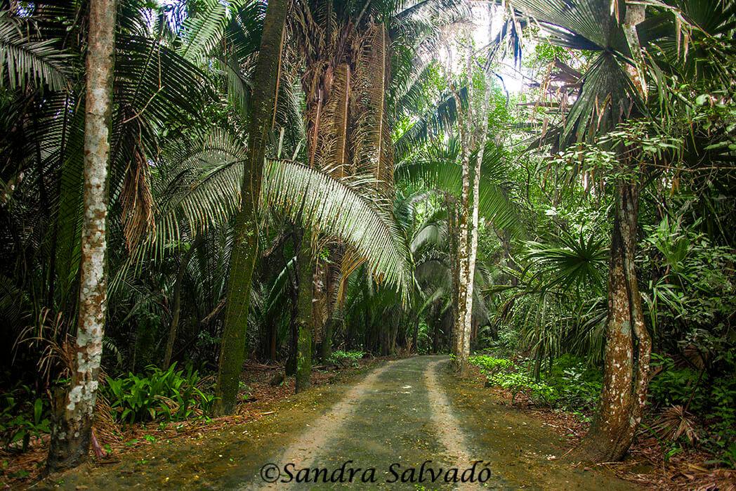 Zona arqueológica Kohunlich, Quintana Ro