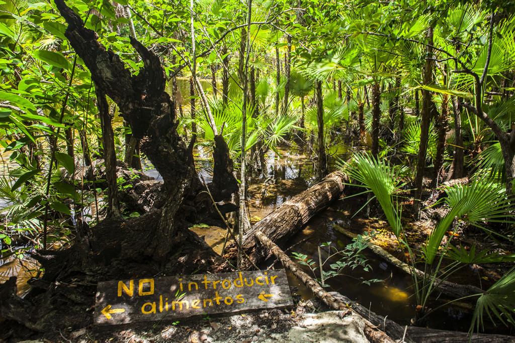 Cenote Las Mojarras