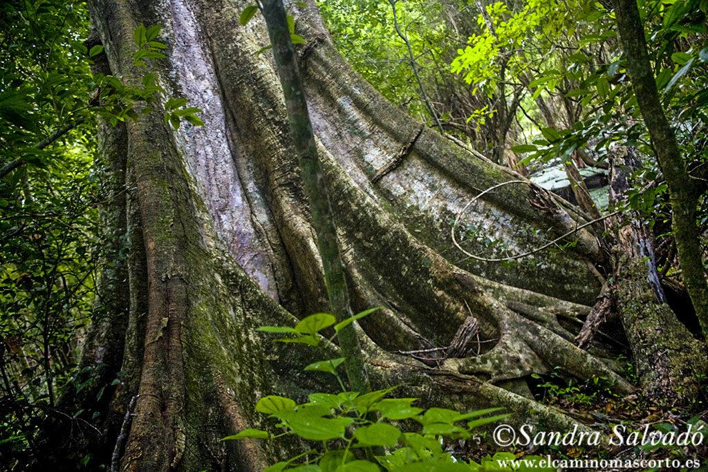 Reserva biosfera calakmul la selva m s viva el camino m s corto al mundo maya - Mas goy fornells de la selva ...