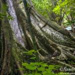 Reserva Biosfera Calakmul, la selva más viva