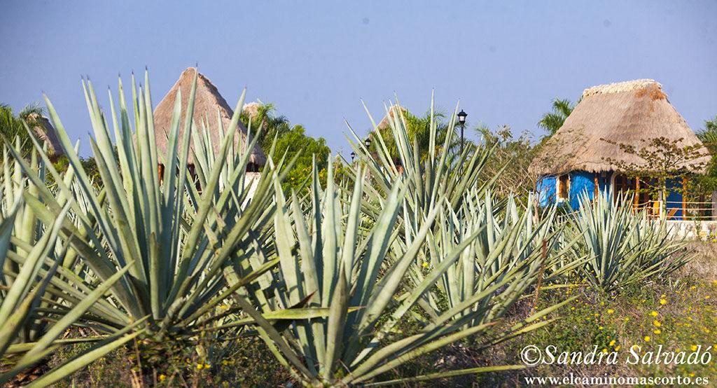 Hacienda Sotuta de Peon, Tecoh, Yucatan, Mexico.
