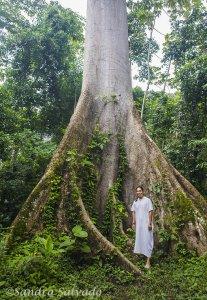 Reserva Biosfera Montes Azules, Selva lacandona, Lacanja Chansayab, Chiapas