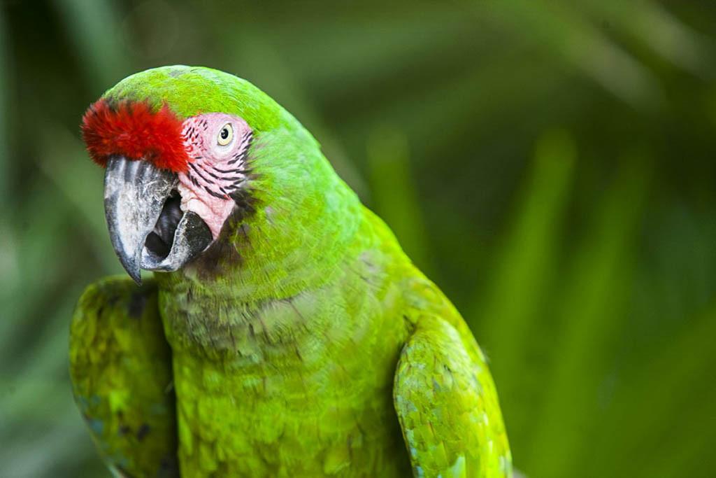 Macaw at Xcaret Eco Theme Park, Playa del Carmen, Riviera Maya, México.