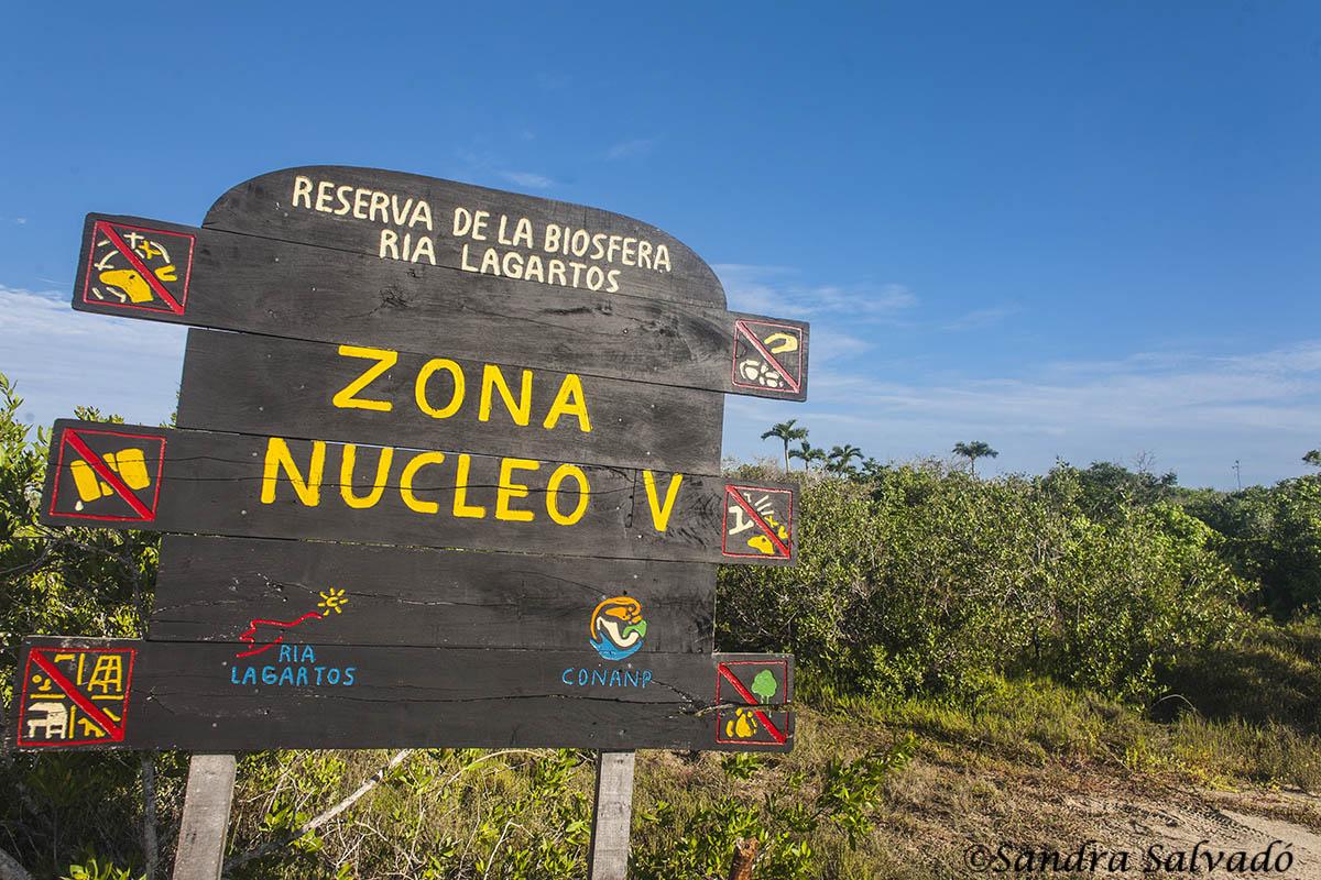 Anillamiento flamencos en El Cuyo, Reserva Biosfera Ría Lagartos, Yucatán