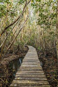 Reserva Biosfera Ría Lagartos, Yucatán.