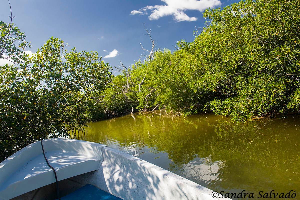 Reserva Biosfera Ria Lagartos, Río Lagartos, Yucatán