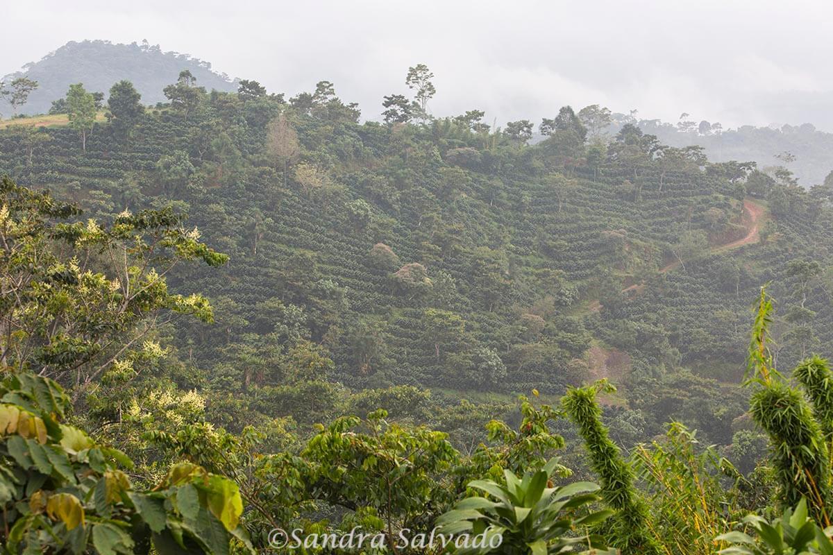 Ruta del café, Tapachula, Chiapas