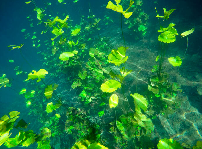 Cenote Lucero Verde, Quintana Roo