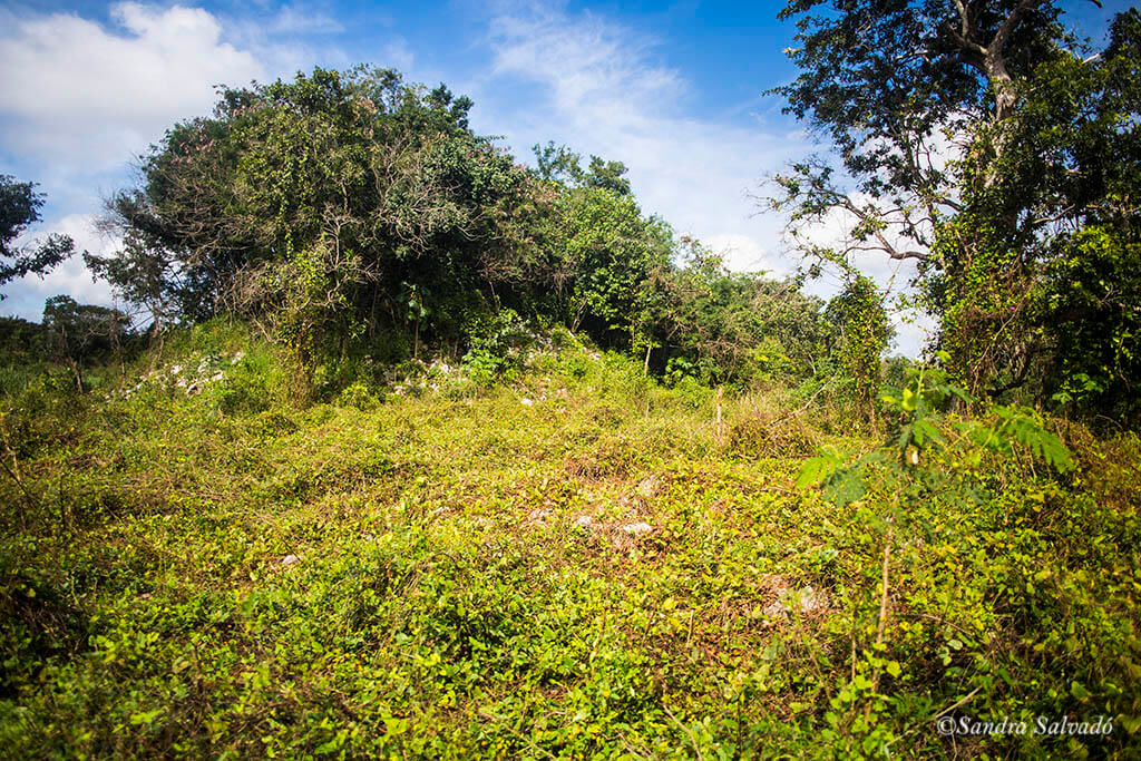 Yaxunah archaeological zone, the forgotten Mayan vestiges