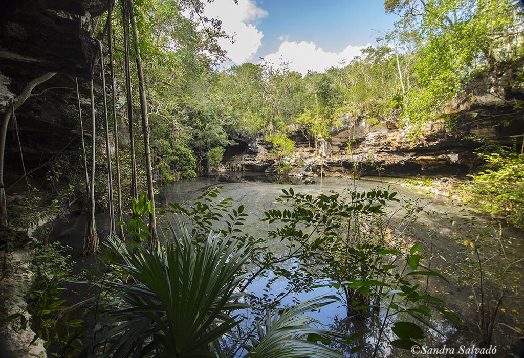 how many cenotes are there in Yucatan