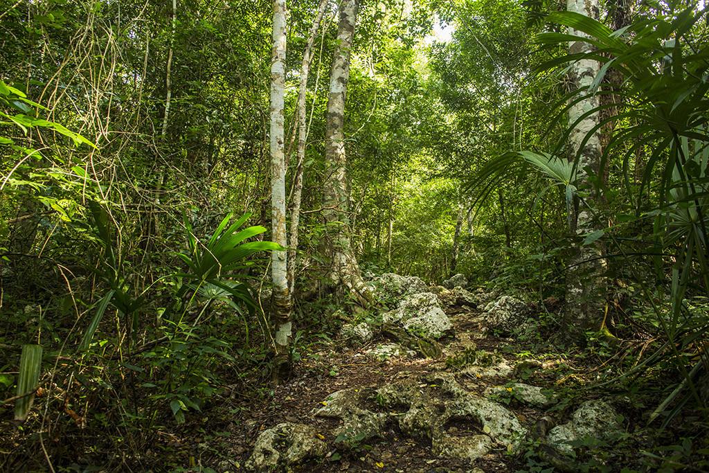 Selva en Punta Laguna, Quintan Roo, México.