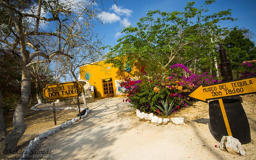 cenote_hubiku_temozon_yucatan