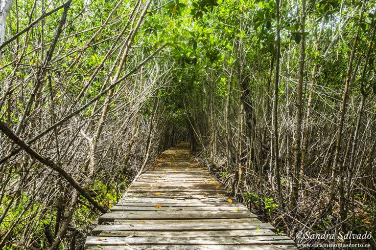 Costa Esmeralda, la costa yucateca 1
