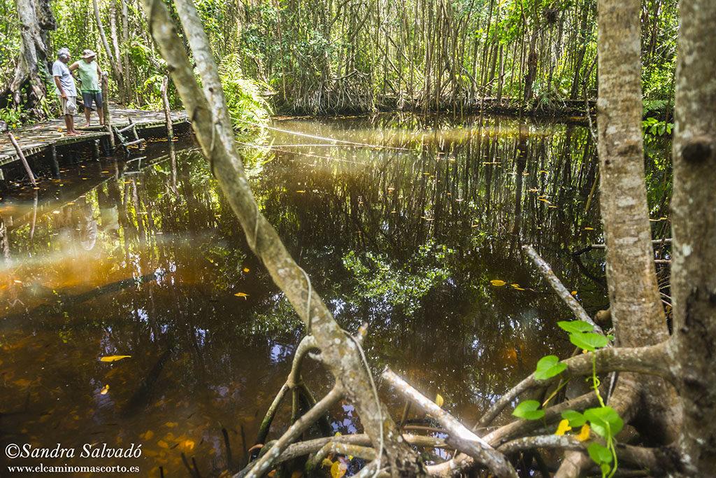 cenote elepeten