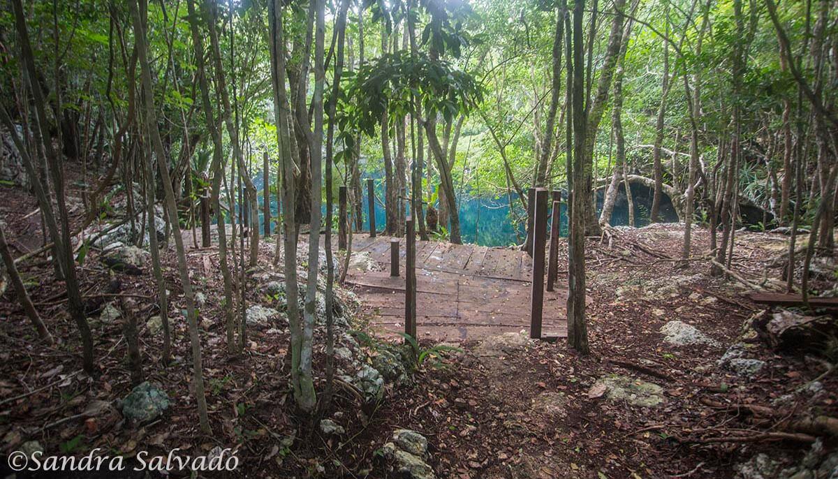 Cenote Angelita, Tulum, Quintana Roo.