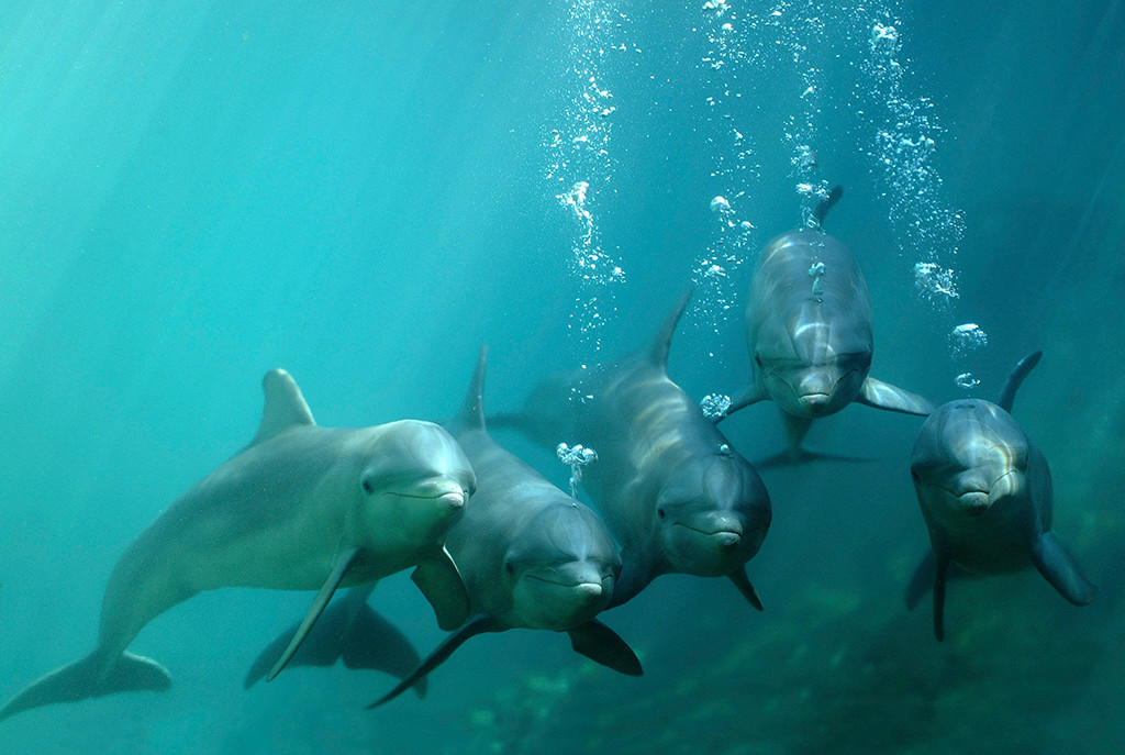 Swim with dolphins in Riviera Maya 1