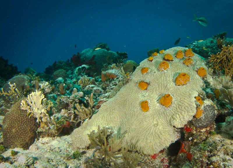 Coral reef. Riviera Maya, Quintana Roo, Mexico.