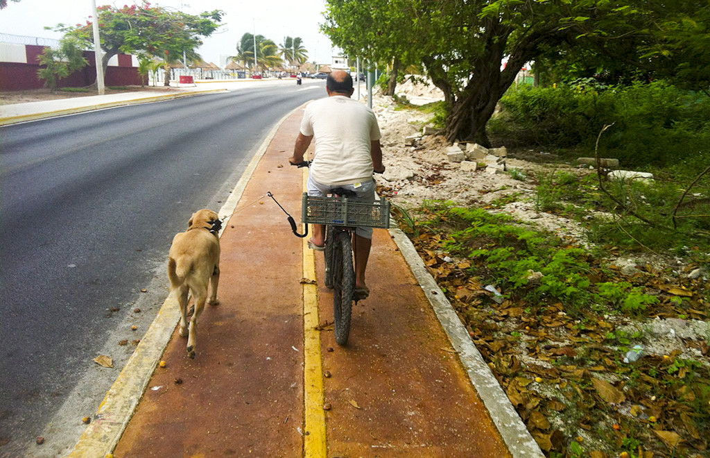 Dog and man walk through Puerto Juarez, Cancun, Mexico.