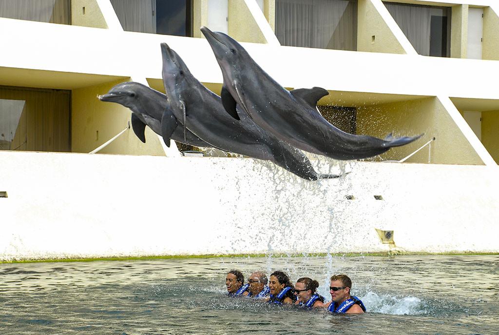 nado_con_delfines_riviera_maya