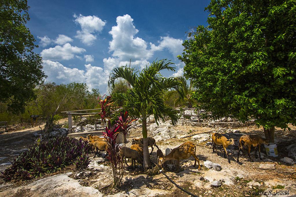 Cenote Agua Dulce, una cavidad de impresión 2