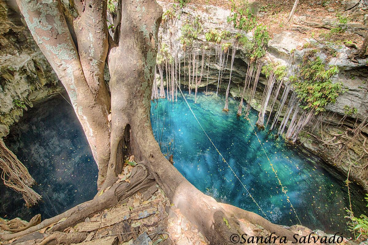 cenote lol ha yaxunah yucatan