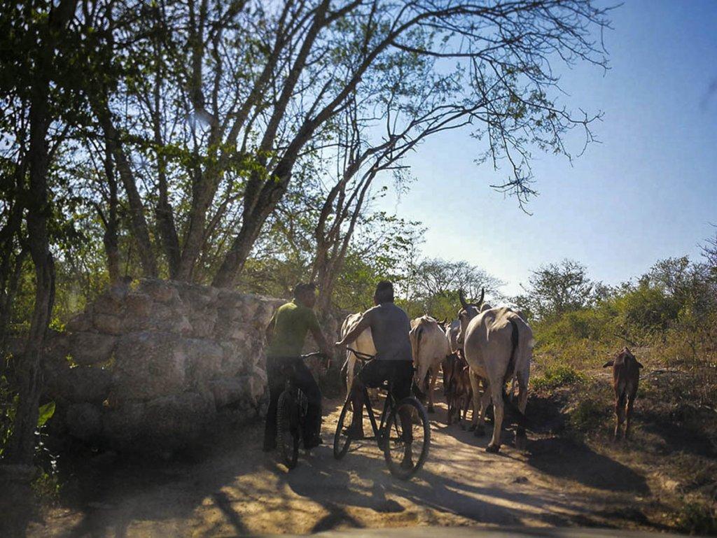cenotes-Pixyah_Yucatan