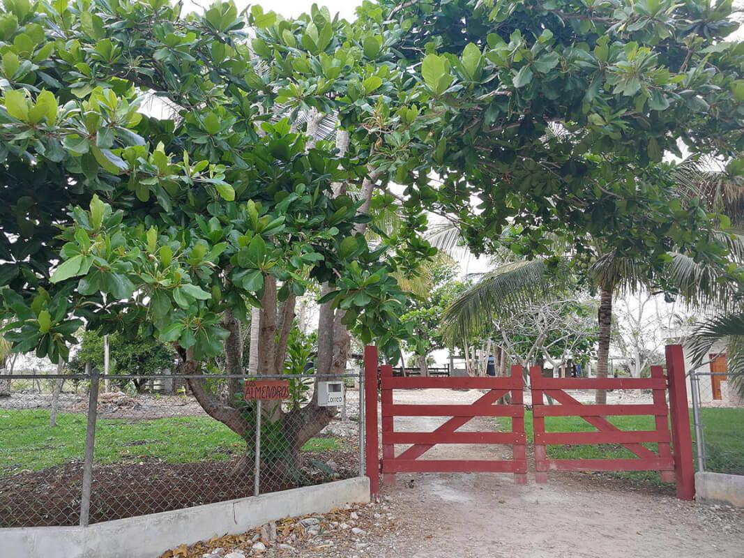 Cenote Usil, Cenotillo y sus cenotes 1