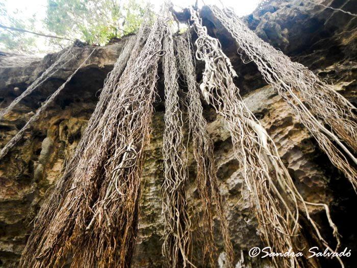 Cenote Yaaluzdzil, camino a Mucuyché 2