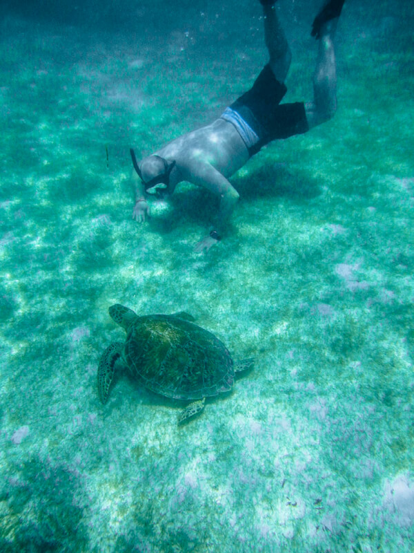 see caribbean turtles