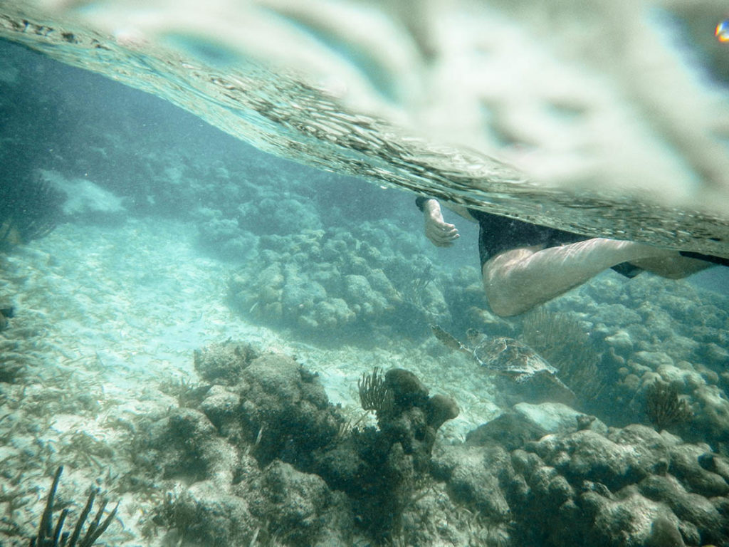 Swim with turtles in Akumal Bay 5