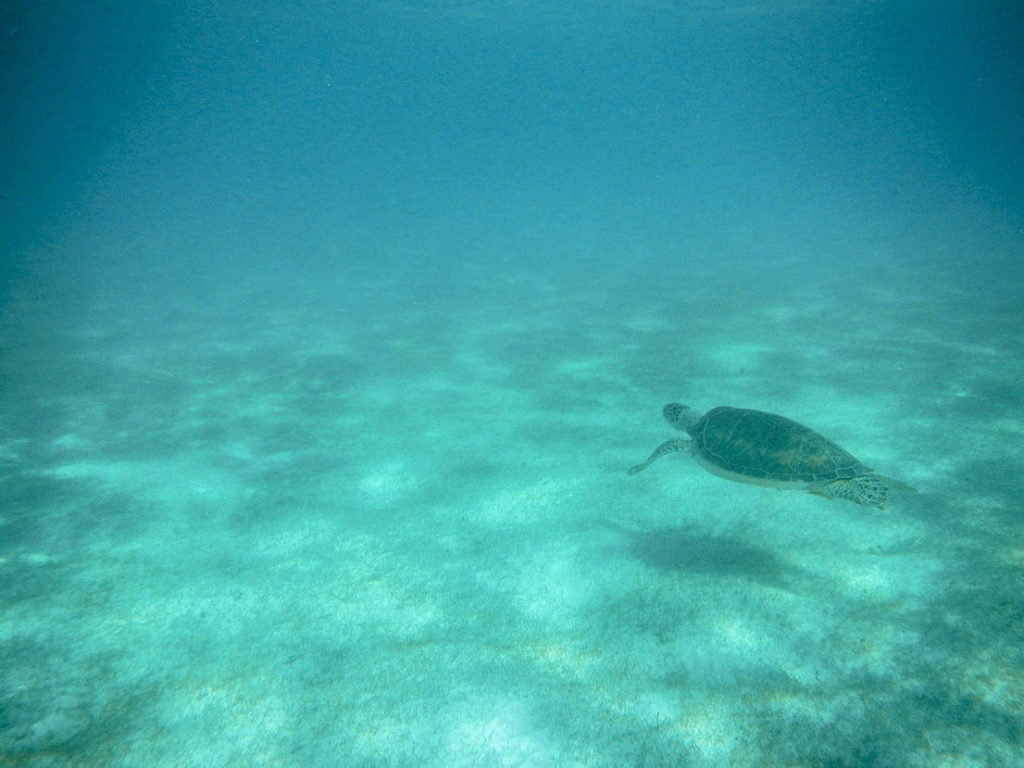 Swim with turtles in Akumal Bay 3
