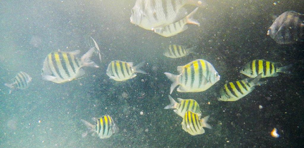 peces snorkel mar cariba.