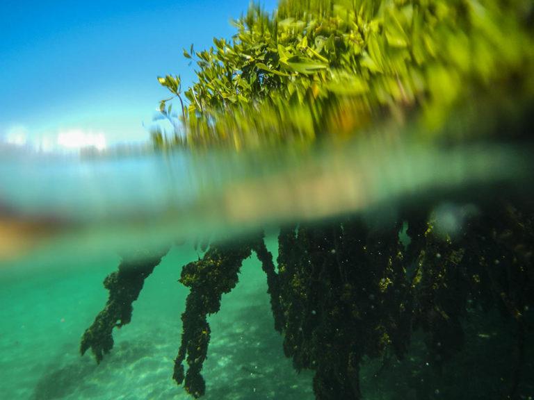 haloclina cenotes