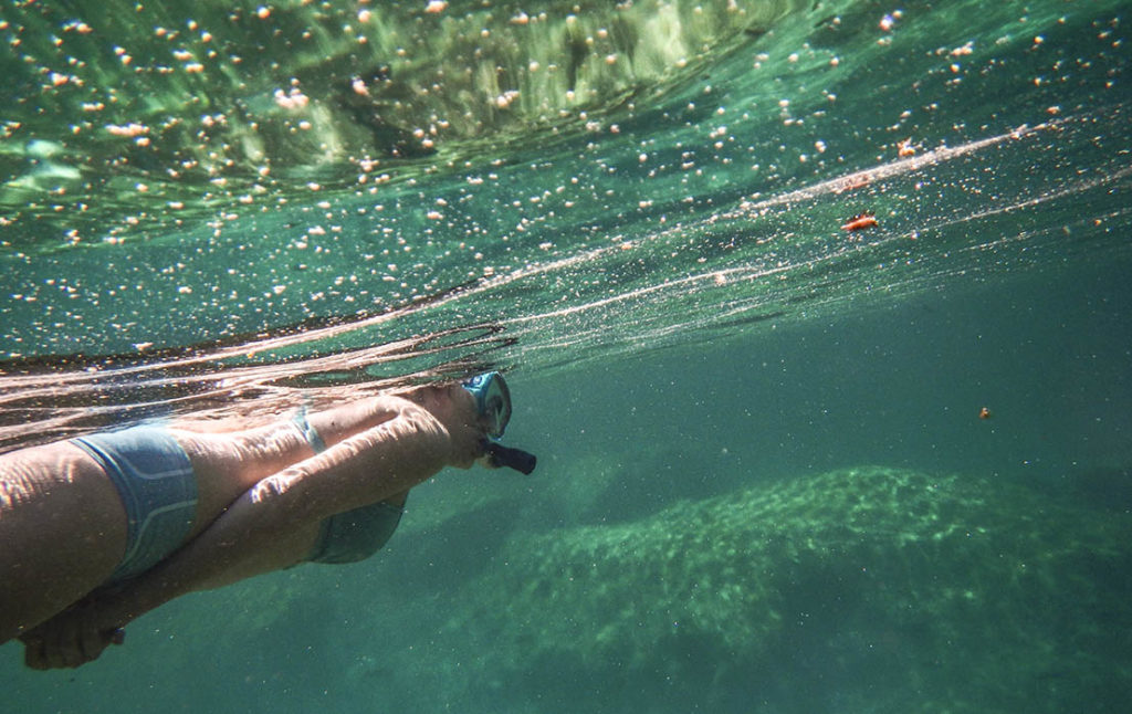 snorkeling in riviera maya
