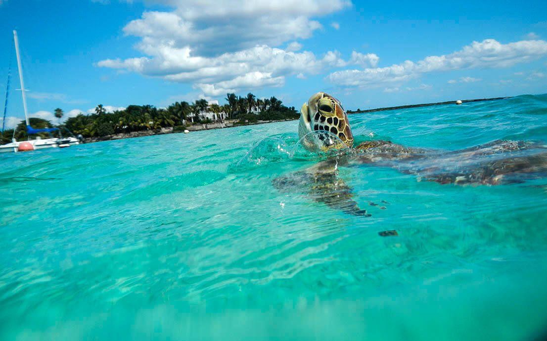 Akumal, swim with turtles