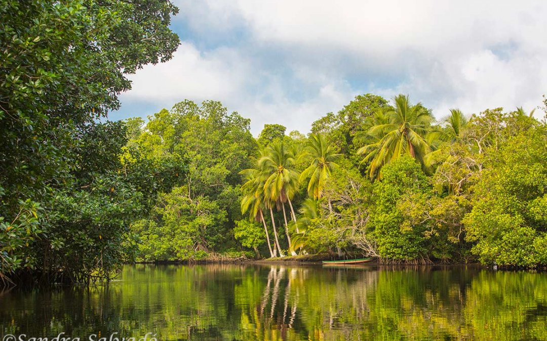 El Castaño, La Encrujicada Biosphere Reserve, Chiapas