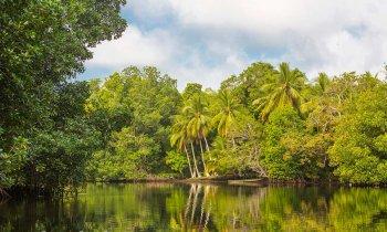 Discover El Castaño, pure nature in Chiapas