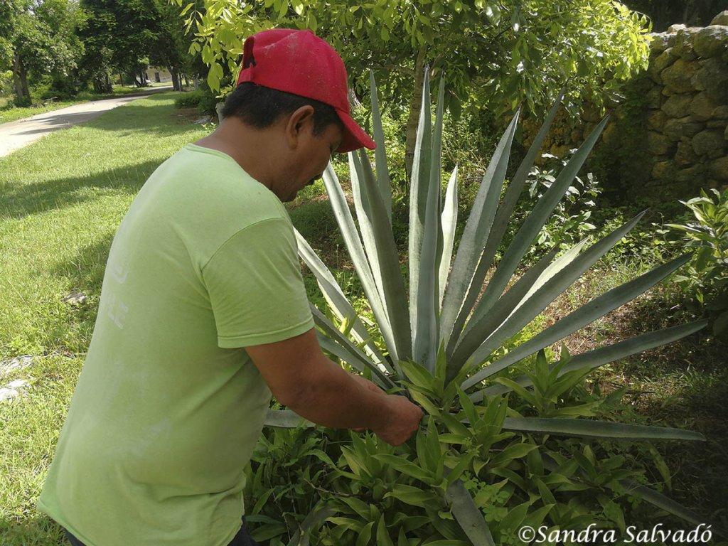Hacienda Ake, Yucatan