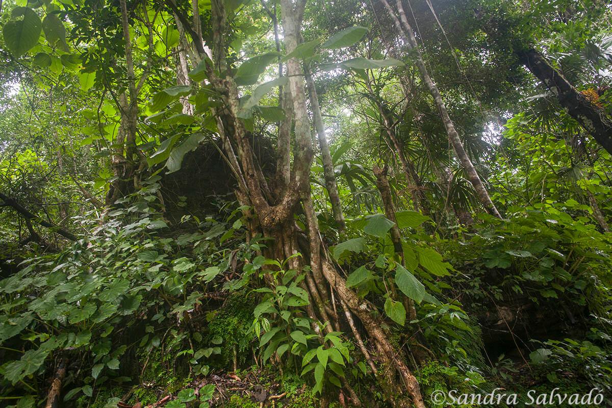 Selva en Las Nubes, Chiapas, México.