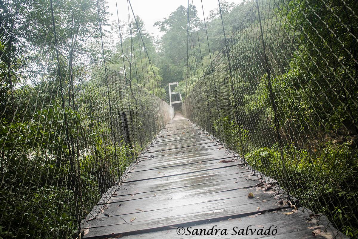 Puente sobre el río  Santo Domingo. Reserva Biosfera Montes Azules   Chiapas, México.