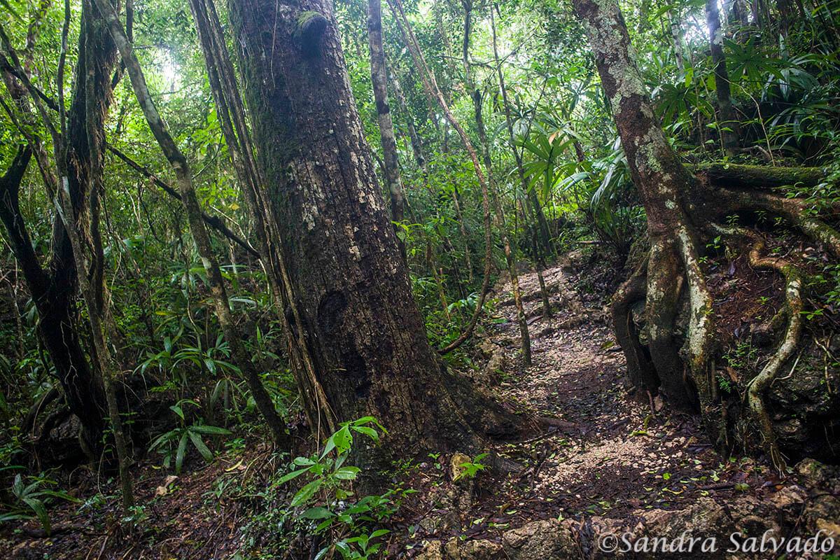 Reserva Biosfera Montes Azules   Chiapas, México.