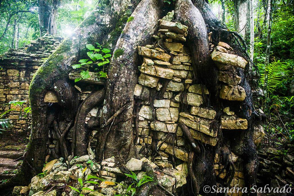 Zona-arqueologica-Piedras-Negras