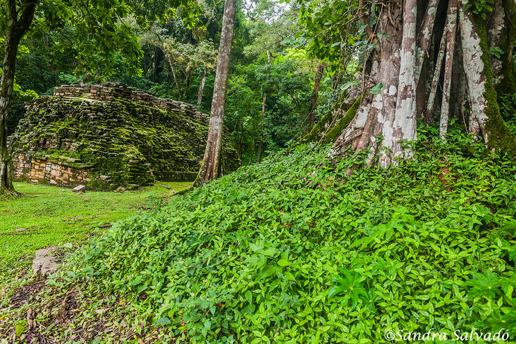 Discover Yaxchilán, the 10 of the Mayan cities in Mexico 1