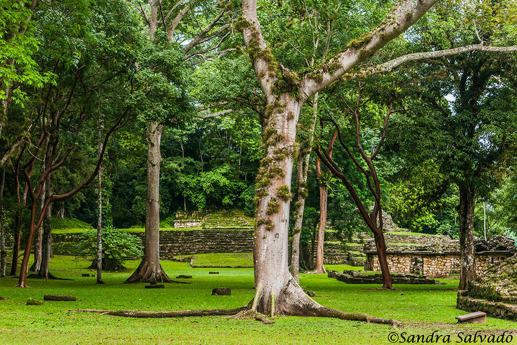 Yaxchilan archeological zone